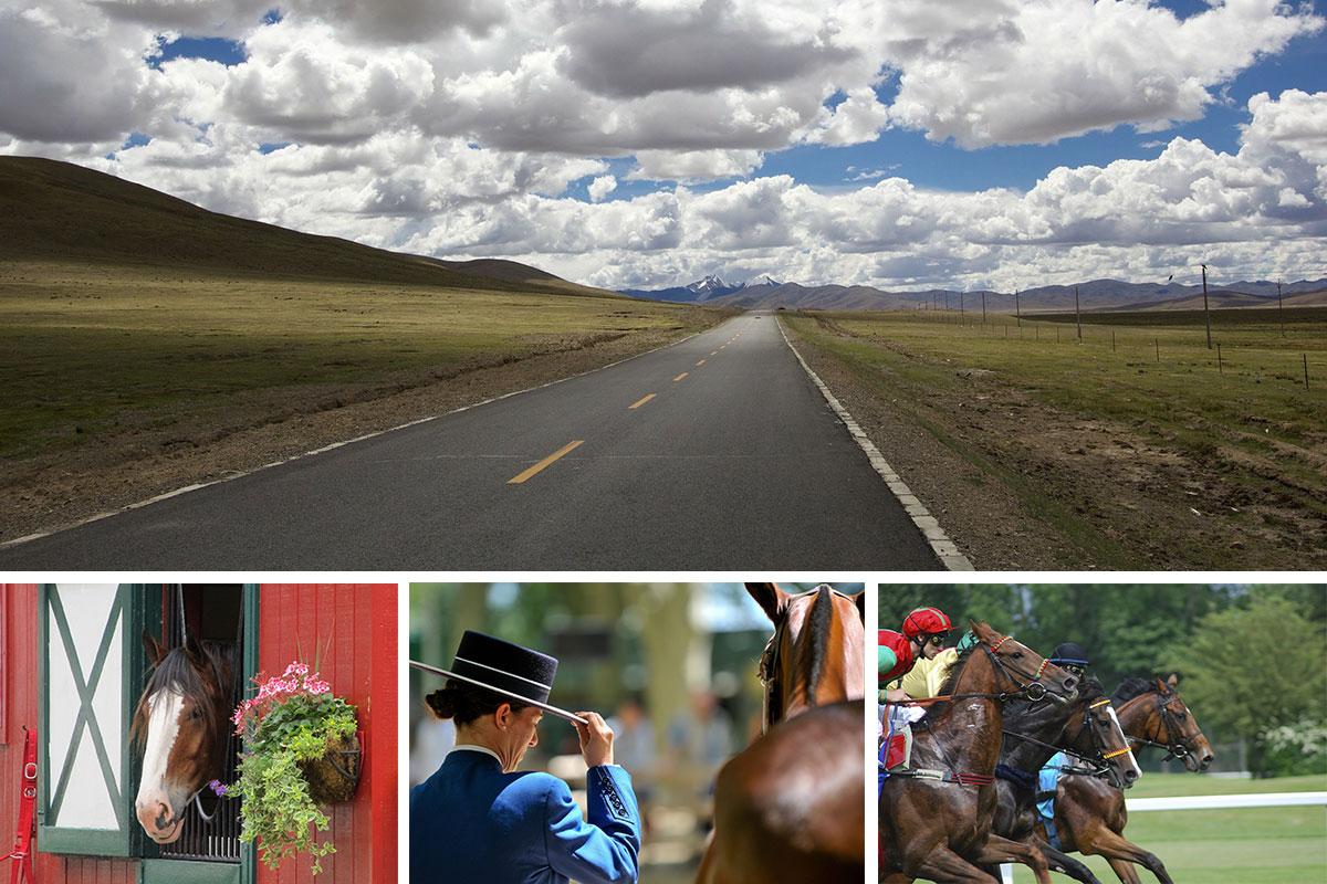 Trasporti cavalli in Italia e in tutta Europa