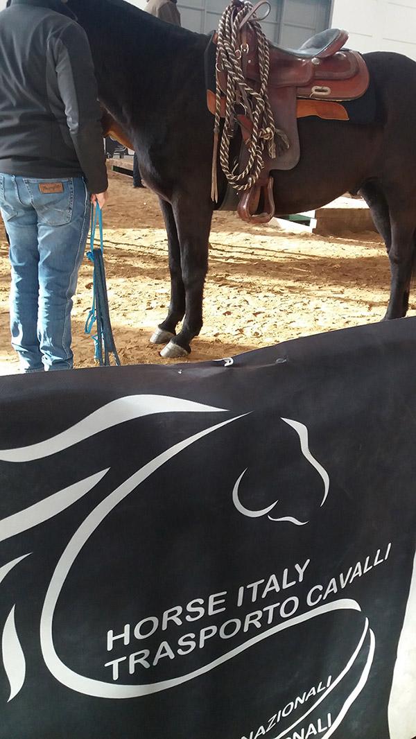 Trasporti nazionali cavalli, trasporti ippici Italia